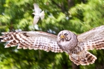 owl3-2